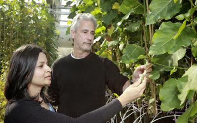 DOE funds Center for Bioenergy Innovation at ORNL