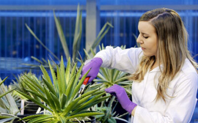 ORNL turning plants into plastic as part of new research project