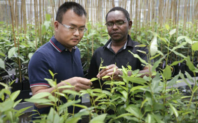 Critical plant gene takes unexpected detour that could boost biofuel yields